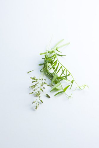 photographie professionnelle, bouquet herbes