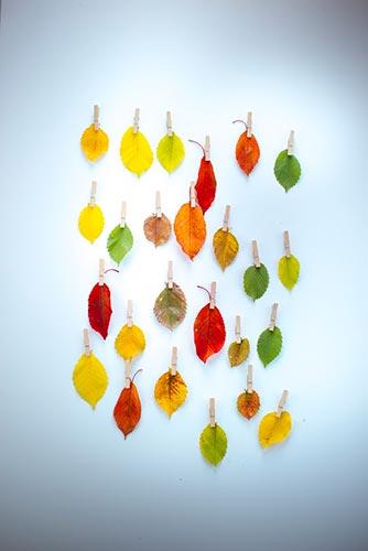 calendrier-decaller-de-feuille-d-automne