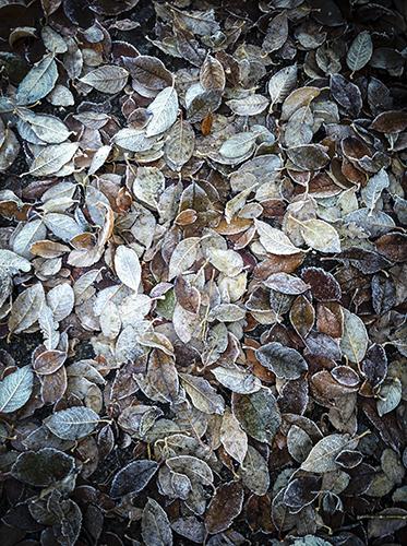 feuillage-automne-sombre
