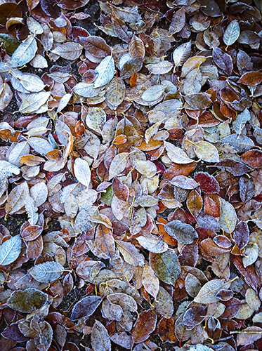 feuillage-automne-couleurs