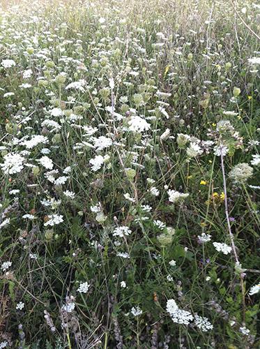 champs-fleurs-primtemps